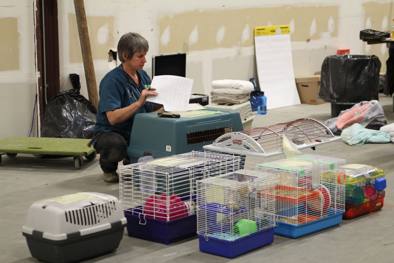 Volunteer veterinary teams take in all species of rescued animals.