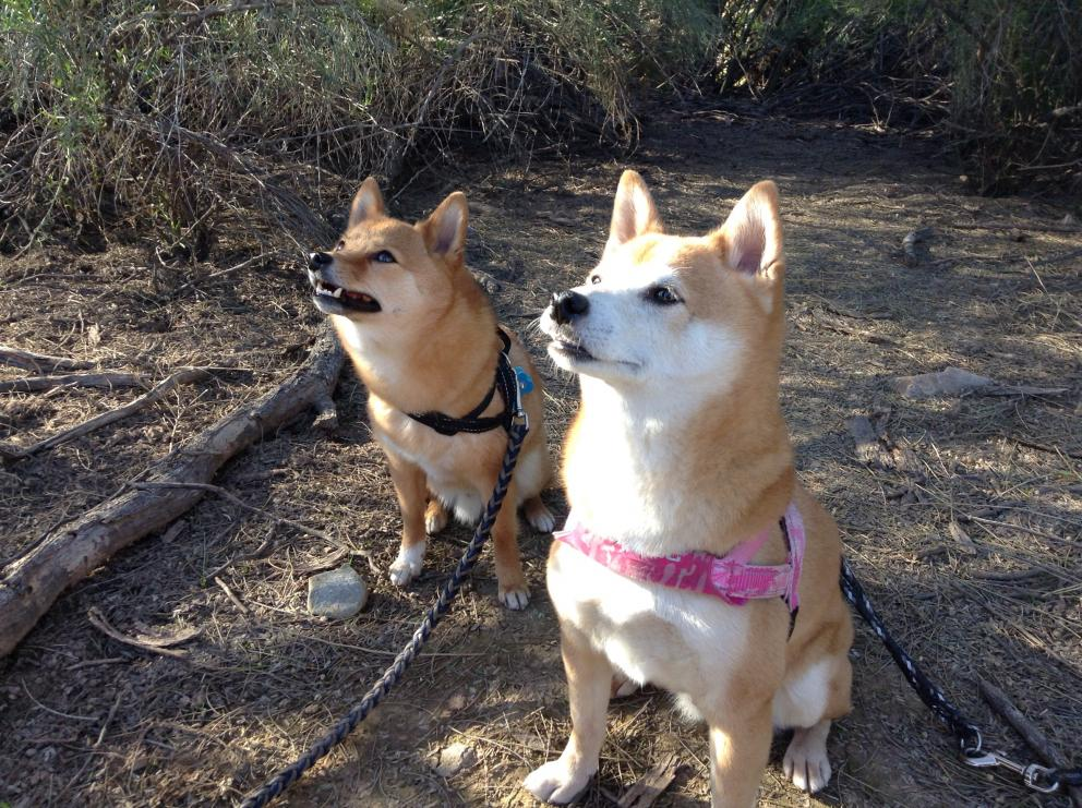 Taking Your Pets To National Parks | Alberta Animal Health Source