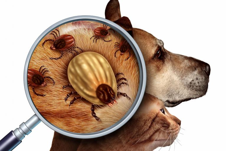 Alberta Animal Health Source Veterinarian Approved